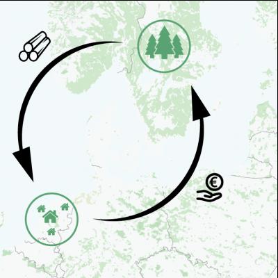 evergreen-bomen-en-bouwen